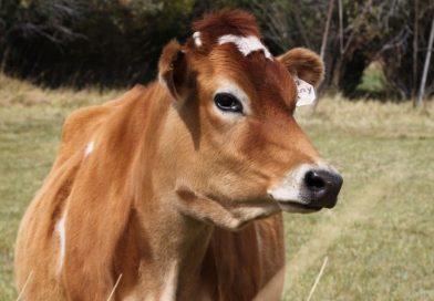 Dairy farmers adopt biogas to cut costs
